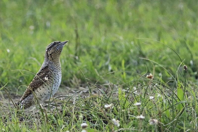 Studiemiddag over implementatie van de Vogel- en Habitatrichtlijnen in Nederland.